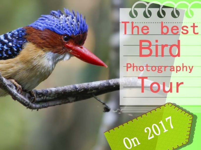 Cat Tien national park & Dalat bird photography tours| 8 days