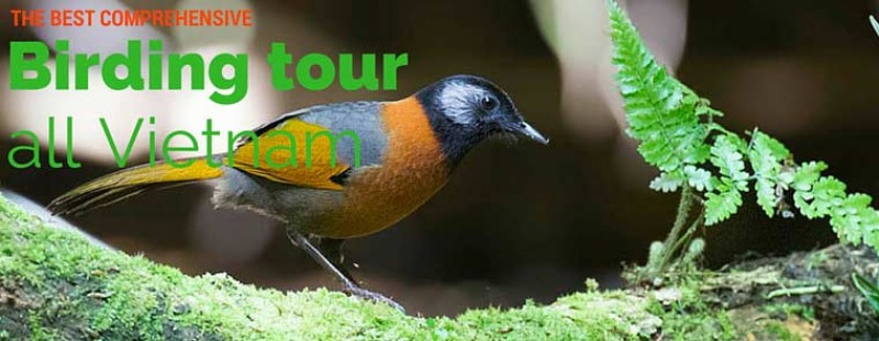 The best comprehensive birding tours in North Central and South Vietnam